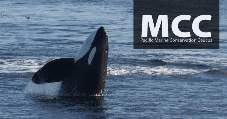 Pacific Marine Conservation Caucus logo floats beside a killer whale.